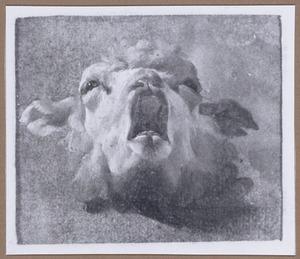 Kop van een schaap, omhoog