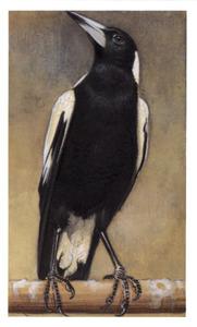 Bonte fluitvogel