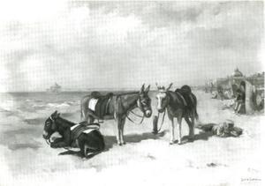 Ezels op het strand van Scheveningen