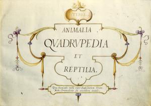 TERRA./ ANIMALIA/QUADRUPEDIA/ ET REPTILIA