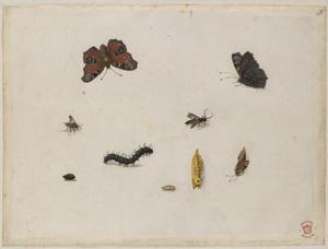 Negen insecten, waaronder een dagpauwoog