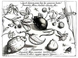 Muis, kaars, citroen, aarbeien, insecten en bloemen