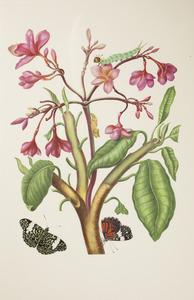 Tempelboom met twee vlinders