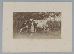 Meisje met koeien