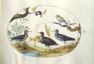 Vier vogels