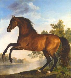 Scrub, bruin paard van de Markies van Rockingham