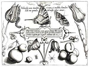 Twee tulpen, vlinders en andere insecten, enkele pruimen en andere vruchten