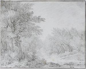 Boslandschap met bospad