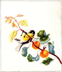 Abrikozentak met vogel (Koolmees?)