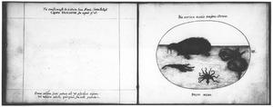 Walrus, intvis en andere zeedieren