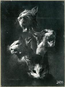 Vier kopstudies van een wilde kat