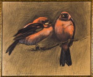 Twee vogels op een tak