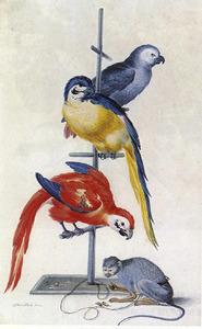 Drie papegaaien op een stang met daaraan vastgeketend een aapje, dat nootjes eet