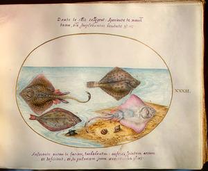 Roggen, vissen en schelpdieren