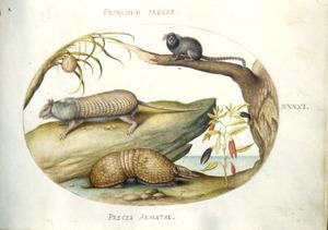 Gordeldier, gordeldierachtige, aap, nachtschade en boom