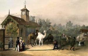 London Zoo, Het Kamelenhuis, 1835