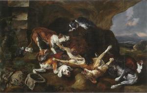 Honden en beer in gevecht