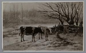 Koeien in de winter
