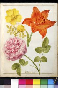 Twee rozen en een vuurlelie