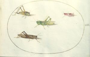 Vier veldsprinkhanen
