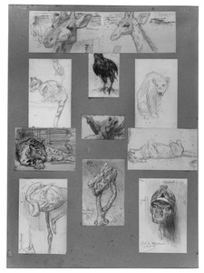 Blad met 10 schetsen van dieren in Artis