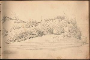 Duinen bij Zandvoort