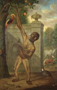 Orang-oetan uit de menagerie van prins Willem V