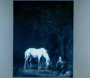 Stal met wit paard
