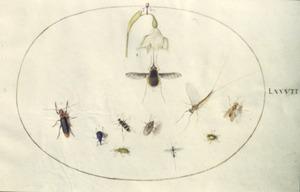 Lenteklokje en tien insecten, voornamelijk kevers