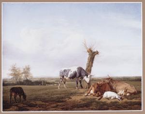 Weidelandschap met rustend vee bij een knotwilg