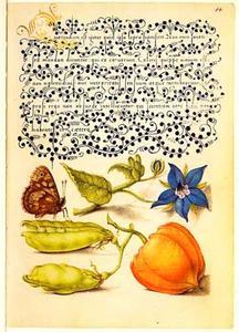 Bernagie, erwt, lampionplant en bont zandoogje