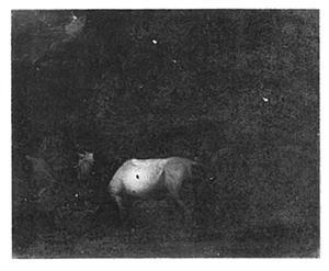 Twee paarden in een donkere grot