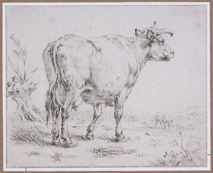 Staande koe in de wei, naar rechts