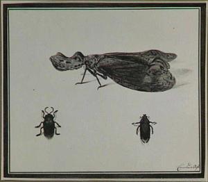Twee kevers en een ander insect