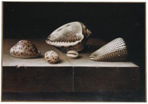 Stilleven van vijf schelpen op een stenen tafel