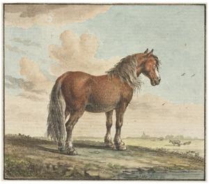 Paard in een weiland