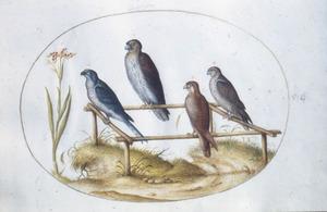 Vier roofvogels op stokken, met links een bloem