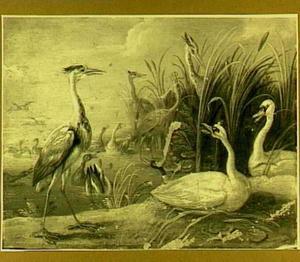 Een reiger en twee zwanen op rivieroever, eenden en