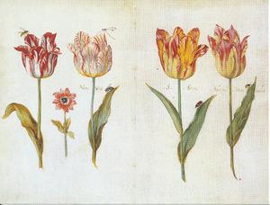 Vier tulpen, een anemoon en verschillende insecten