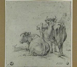 Twee koeien bij een hek