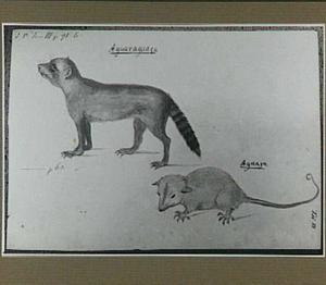 Aguaraguaçu en Aguaja (Braziliaanse zoogdieren)
