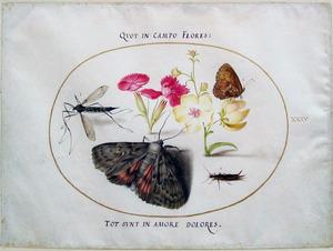 Duizendschoon, toorts en vier insecten waaronder een langpootmug