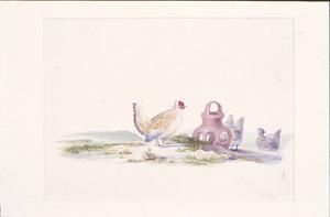 Kippen bij een voederbak