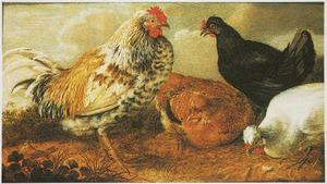 Drie kippen en een haan in een landschap