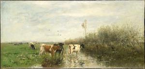 Koeien in een drassig weiland