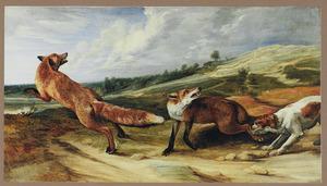 Spaniel twee vossen opjagend in een heuvellandschap