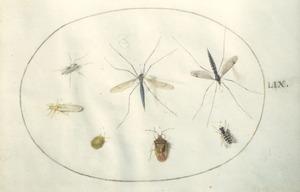Zes insecten waaronder muggen en kevers