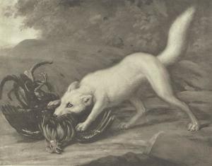 Een witte vos