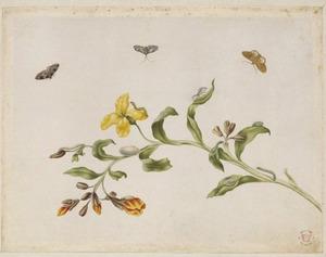 Muurbloem met metamorfoses van vlinders