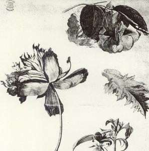 Studie van vier bloemen